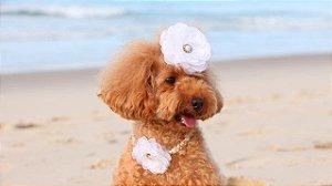 Flor Pet DELICADA para Cães e Gatos