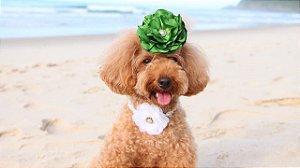 Flor Pet COLLOR para Cães e Gatos