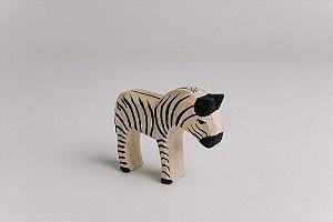 Zebra filhote