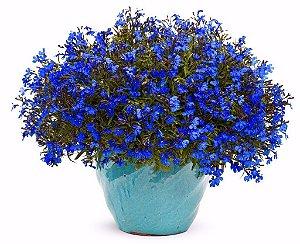 100 Sementes De Facélia Azul