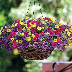 900  Sementes Petúnia Belo Perenes Sementes De Flores Plantio Bonsai Plantas Jardim De Casa