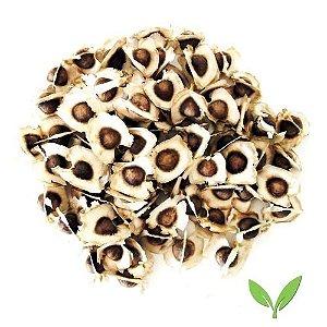 50 Sementes Moringa Oleífera- Para Plantar P/vasos E Jardim