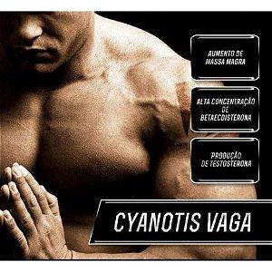 Turkesterone 500mg + Cyanotis Vaga 200mg - Força, Energia, Potência
