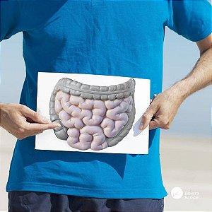 Probiótico Intestinal : Pool De Lactobacillus