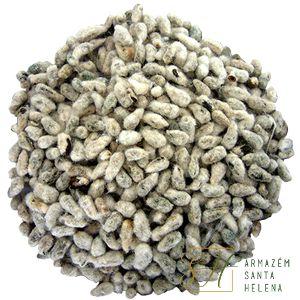 CHÁ DE SEMENTE DE ALGODÃO 100G (Algodoeiro, Gossypium Herbaceum)