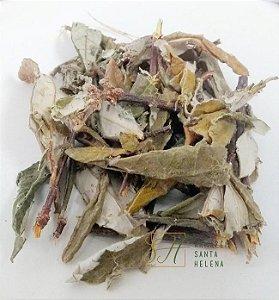 CHÁ DE CIPÓ PRATA 100G (Banisteria Argyrophylla)