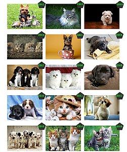 Placas Decorativas Pet Shop Cachorro Gato
