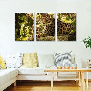 Kit 3 quadros Onça Pintada Amazônia Floresta Jaguar Onça-preta