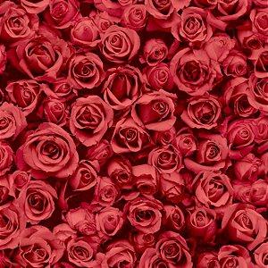 Papel de Parede Rosas - L77010