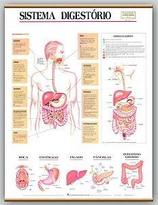 Mapa Sistema Digestório