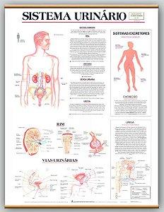 Mapa Sistema Urinário