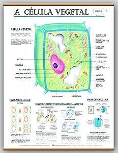 Mapa A Célula Vegetal