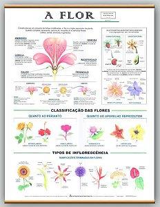 Mapa a Flor