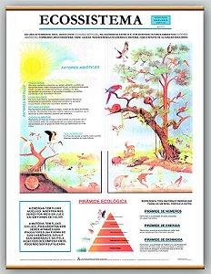 Mapa Ecossistema
