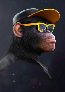 Quadro Decorativo Monkey Glasses - AN0006