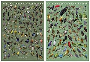 Poster Aves da Floresta Atlântica (COMBO) Volumes 1 e 2
