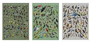 COMBO: 2 Posters Floresta Atlântica 1 e 2 + Caatinga +(Guia de Aves de Foz do Iguaçu GRÁTIS!)