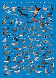 Poster das Aves Costeiras