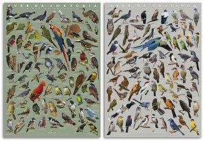COMBO: Poster das Aves da AMAZONIA + CAATINGA + GUIA DE AVES DE FOZ DO IGUAÇU (GRÁTIS!)