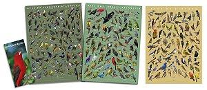 COMBO: Guia de Aves + 3 Posters Floresta Atlântica 1 e 2 + Aves Cerrado