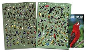 COMBO: 2 POSTERS + GUIA das Aves da Floresta Atlântica
