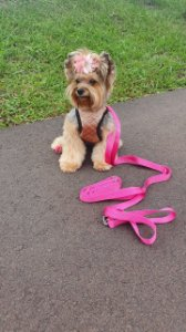 Guia para Cachorro Long Guide Rosa LuckyPet