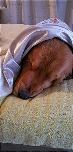 Manta para Cachorro Cobertor e Cetim Dupla Face Branca ZenPet