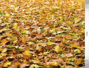 Fundo Fotografico - Folhas 3 (1,50 x 2,10 metros)