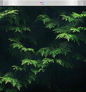 Fundo Fotográfico - Natural Verde Flex (1,50 x 1,60 metros)