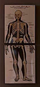 Quadro Anatomia