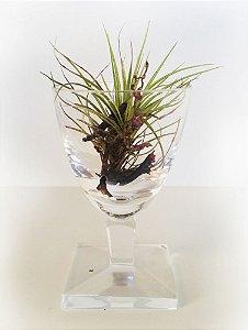 Mini Vaso