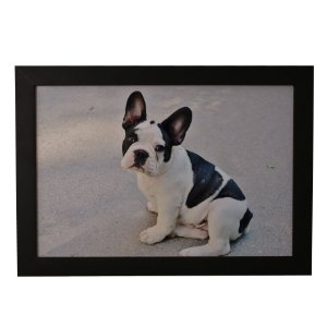 Quadro Decorativo Buldogue Frances