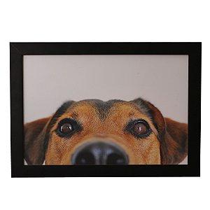 Quadro Decorativo Cachorro Olhando
