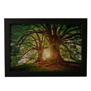 Quadro Decorativo Árvores Gigantes