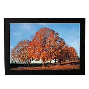 Quadro Decorativo Árvores Ypê