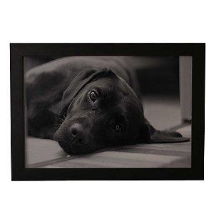 Quadro Decorativo Cão Deitado