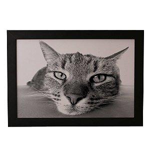Quadro Decorativo Gato de Boa