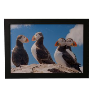 Quadro Decorativo Infantil Pinguins