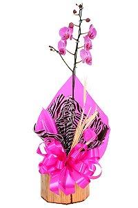 Vaso Plantado Carinhosa Orquidea