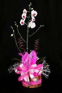 Vaso Plantado Delicada orquidea