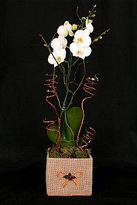 Vaso Plantado Rústica sedução