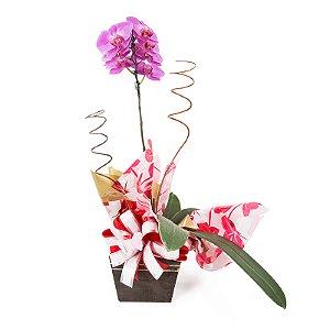 Vaso Plantado Delicado e exubeante