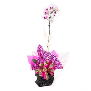Vaso Plantado Delicado presente