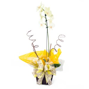 Vaso Plantado Delicada e singela