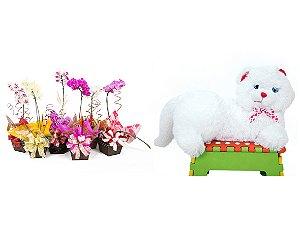 Vaso Plantado Orquídea Variada + Gata Mel
