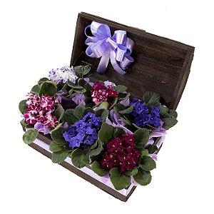 Vaso Plantado Grande Jardim de Violetas
