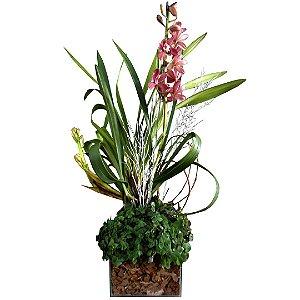 Orquídia Cymbidium