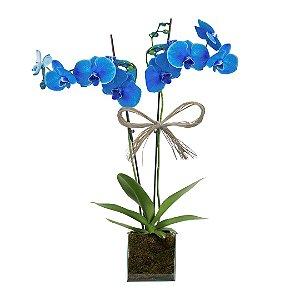 Orquídea Azul no Vaso de Vidro