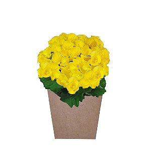 Begônia Amarela Plantada no Cachepot para Presente.