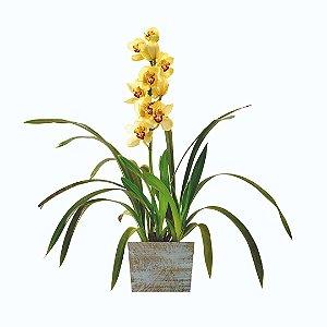 Orquídea Cymbidium Amarela na Madeira